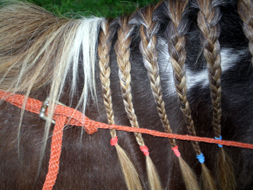 close up of balancing side reins - 2009