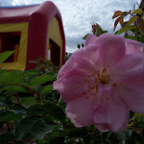 Gardening 2010 - 101_0858.JPG