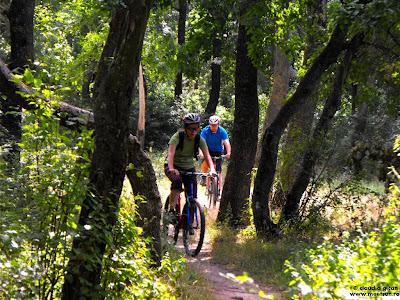 single trail in padurea Comana