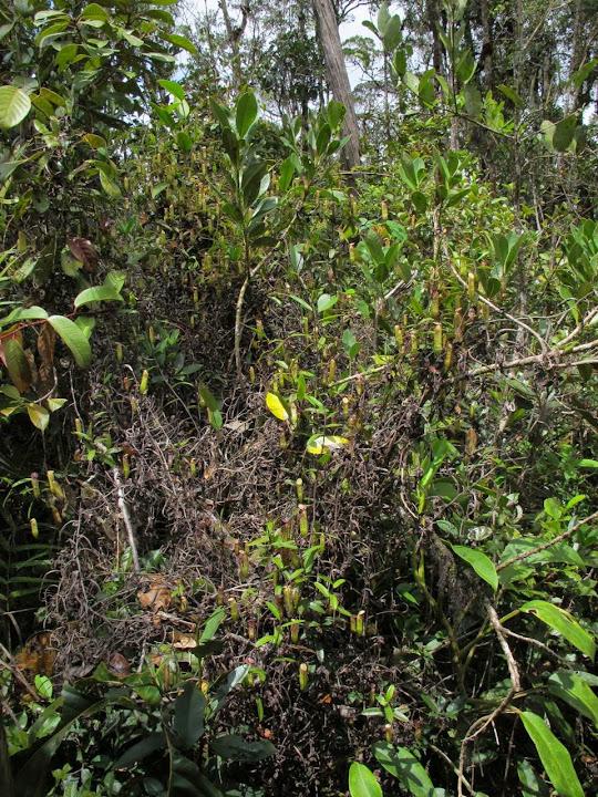 Borneo%25202014%2520extra%25201-01.jpg