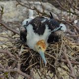 galapagos - Galapagos_FB_2-24.jpg