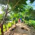तळ्याच्या पारीवर फुलली विविध वृक्षाची बाग. #Pombhurna #Sonapur