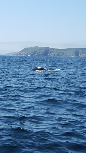 Whale watching in Newfoundland. Yes, I took plenty of photos...