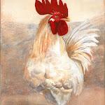 144 Regal Rooster.jpg