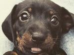 Cute-Dog-C-1 (1)