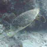 Bonaire 2011 - PICT0132.JPG