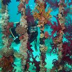 Soft corals on Yolanda Reef
