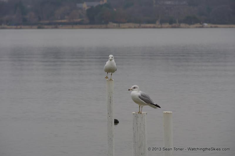 01-26-13 White Rock Lake - IMGP4282.JPG