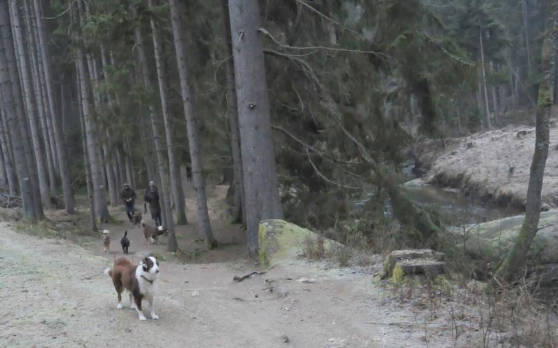 20140101 Neujahrsspaziergang im Waldnaabtal - DSC_9844.JPG