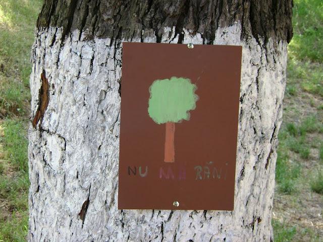 Actiune in colaborare cu Clubul Copiilor pentru pastrarea naturii curate - proiect educational - mai - DSC01739.JPG