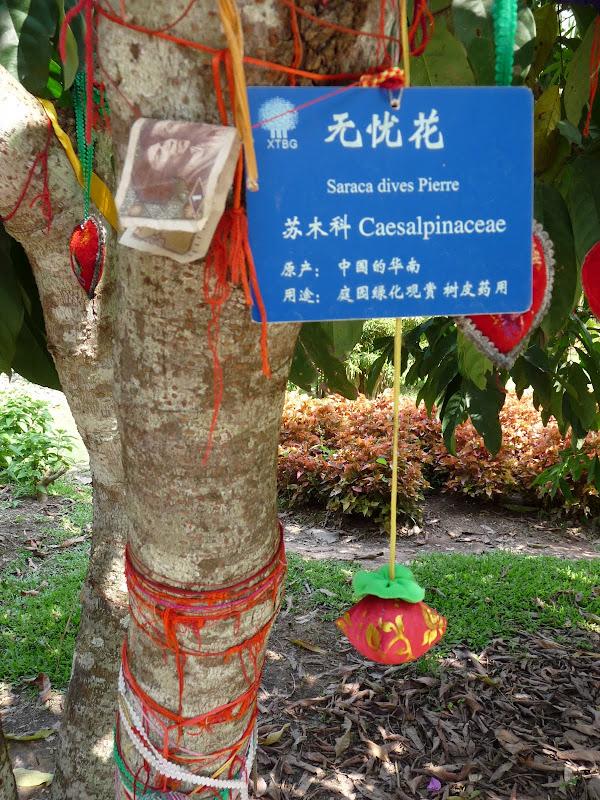 Chine .Yunnan . Lac au sud de Kunming ,Jinghong xishangbanna,+ grand jardin botanique, de Chine +j - Picture1%2B630.jpg