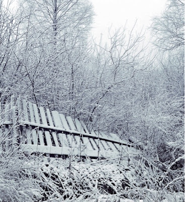 pagar kayu hancur, tumbuh-tumbuhan hancur akibat badai salju