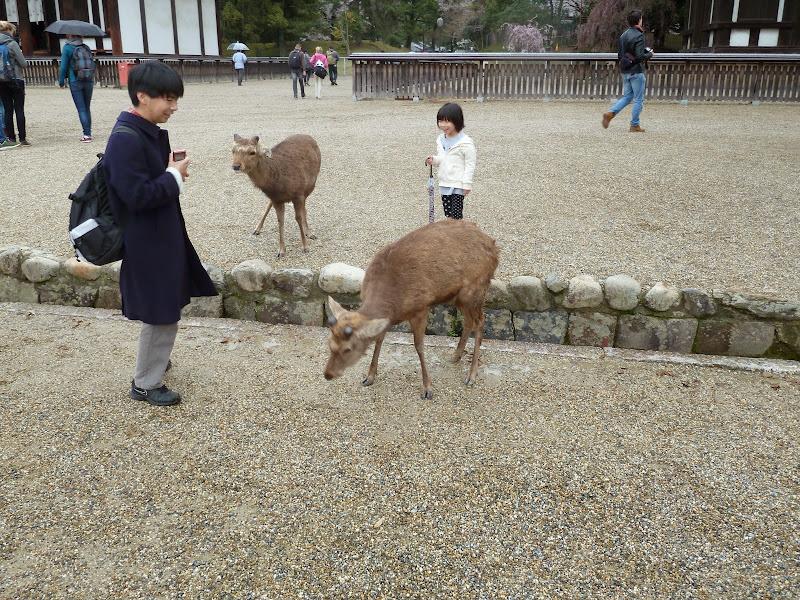 2014 Japan - Dag 8 - mike-P1050691-0226.JPG
