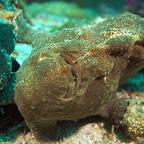 Frogfish