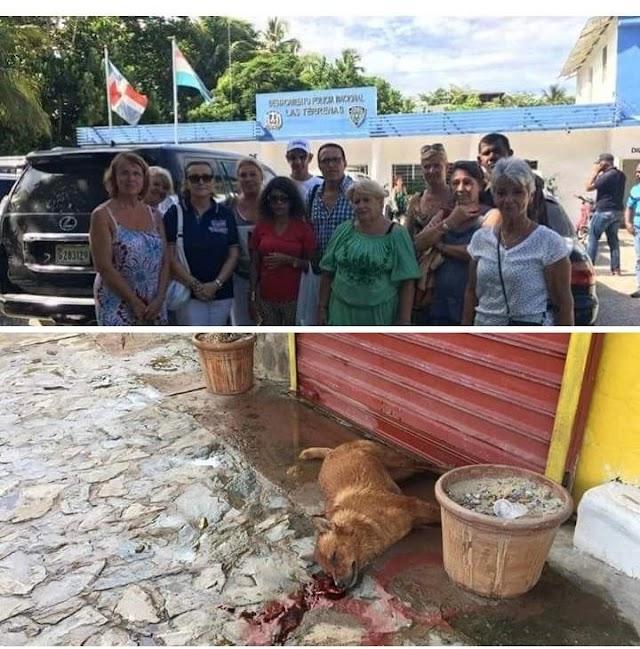 """Denuncian """"25 perros matado en Las Galeras de Samaná""""."""