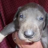 Violet Long @ 3 weeks