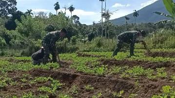 Keakraban  Satgas Bantu Panen Kacang Tanah