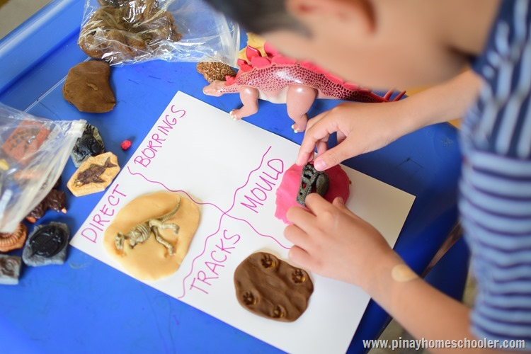 Hands-on Learning on the Types of Fossils