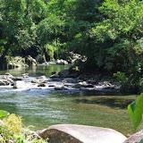 Rio Calovébora, Guabal, 300 m (Veraguas, Panamá), 29 octobre 2014. Photo : J.-M. Gayman