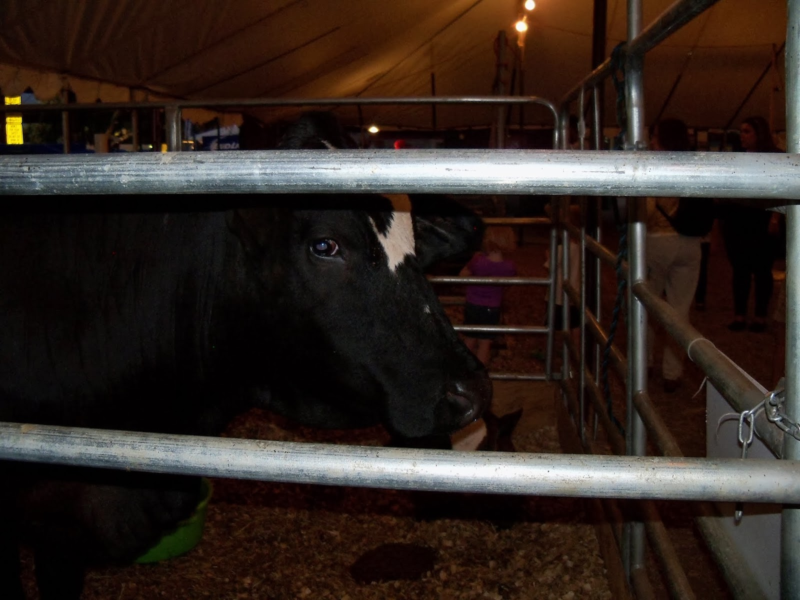Fort Bend County Fair 2013 - 115_7933.JPG