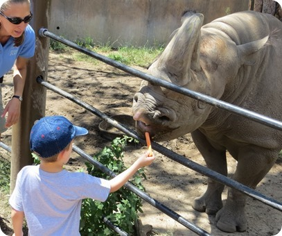 Feeding the Rhino at Cheyenne Mountain Zoo