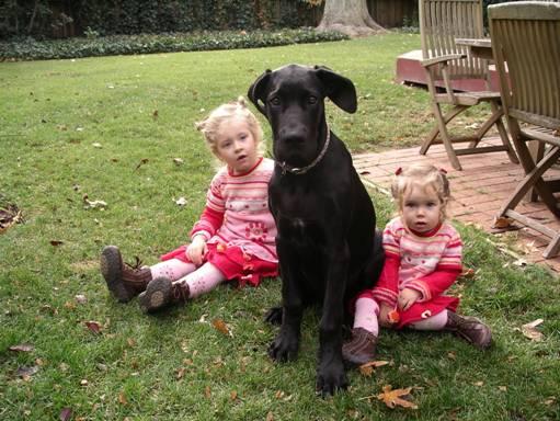 The Dynamite Danes Family! - image003.jpg