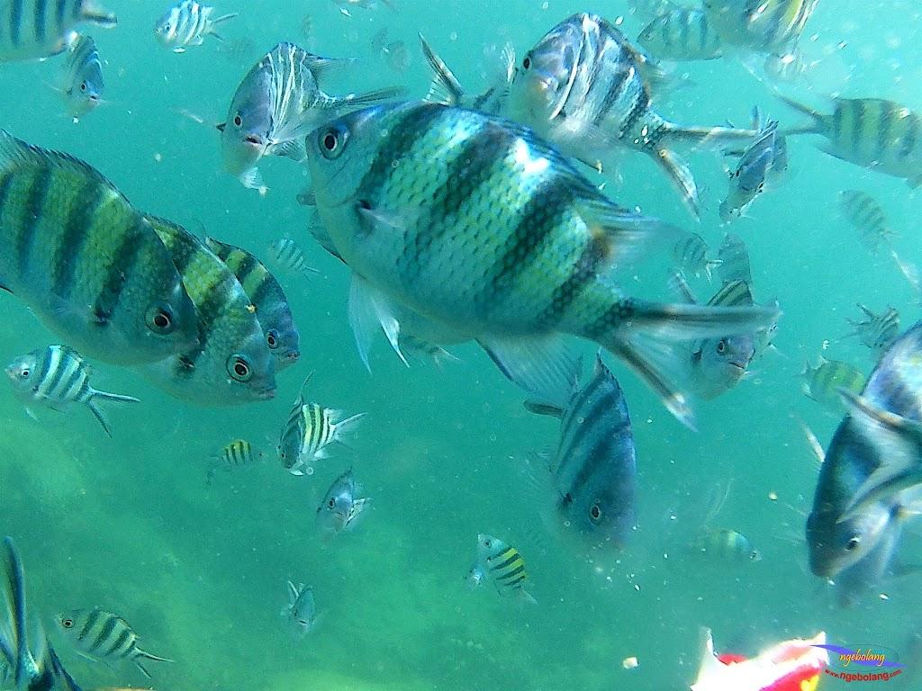 family trip pulau pari 140716 GoPro 28