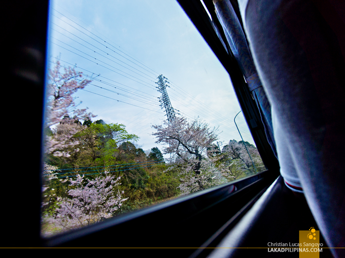 Sakura Season Along the Roads of Japan
