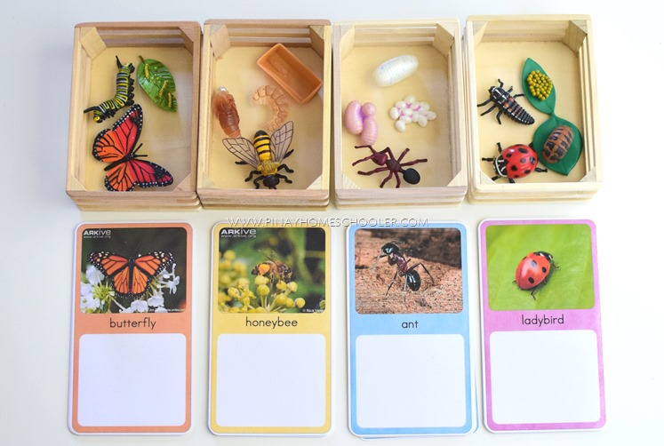 Montessori Inspired Life Cycle of Insects