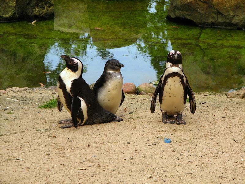 Warszawskie zoo - img_6393.jpg
