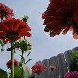 Gardening 2011 - 100_8647.JPG