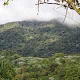 La forêt autour de Los Cedros, 1400 m. Montagnes de Toisan, Cordillère de La Plata (Imbabura, Équateur), 21 novembre 2013. Photo : J.-M. Gayman