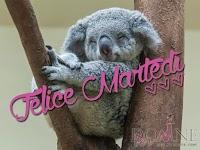buon martedi immagine con frase aforismo koala felic emartedi.jpg