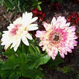 Gardening 2010 - 101_1488.JPG