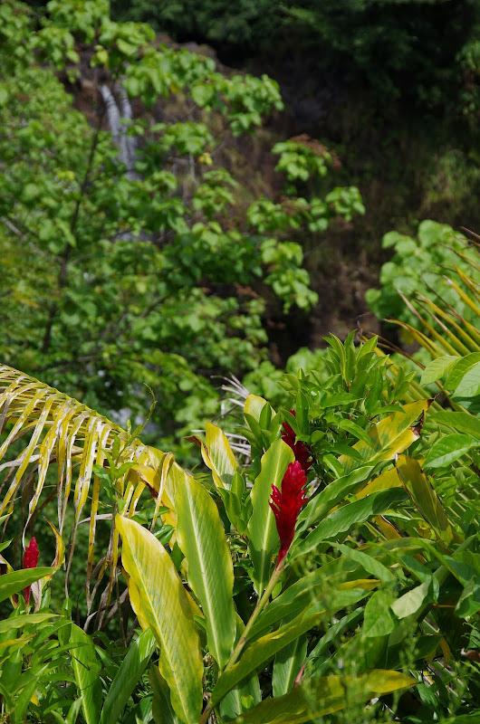 06-23-13 Big Island Waterfalls, Travel to Kauai - IMGP8920.JPG