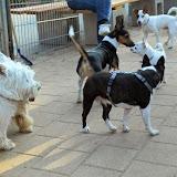 Kleinhundegruppe Mittwoch 17.30 Uhr - DSC_0025.JPG