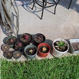 Gardening 2010, Part Two - 101_3111.JPG
