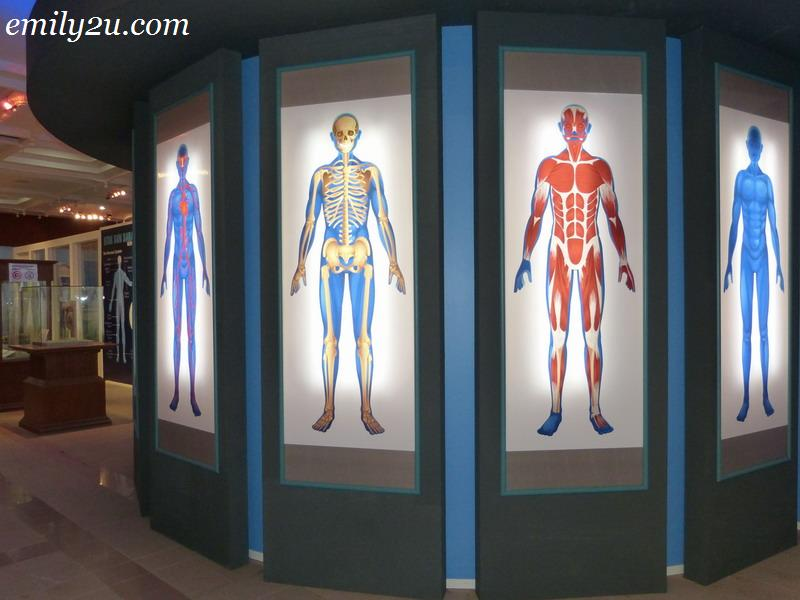 human organ exhibition