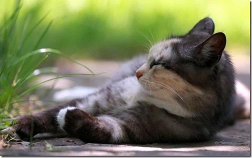 22 fotos de gats (43)