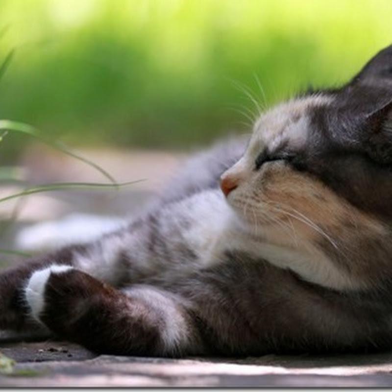 i imágenes grandes de gatos para descargar