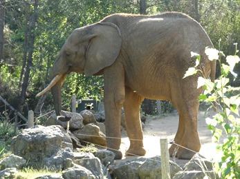 2017.06.17-079 (19.12) éléphant