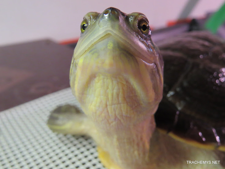 mes tortues (BK) - Page 11 IMG_2193