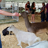 Fort Bend County Fair 2014 - 116_4264.JPG