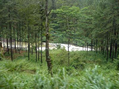 Water stream in hill country ,Sri Lanka