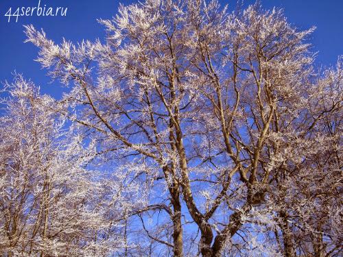 Снежная сказка Сербия