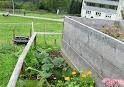 Kompostpflanzen KürbisseIMG_0704.JPG