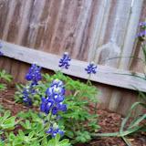 Gardening 2014 - 116_1465.JPG