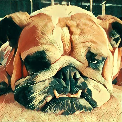 Dash_Rendar926