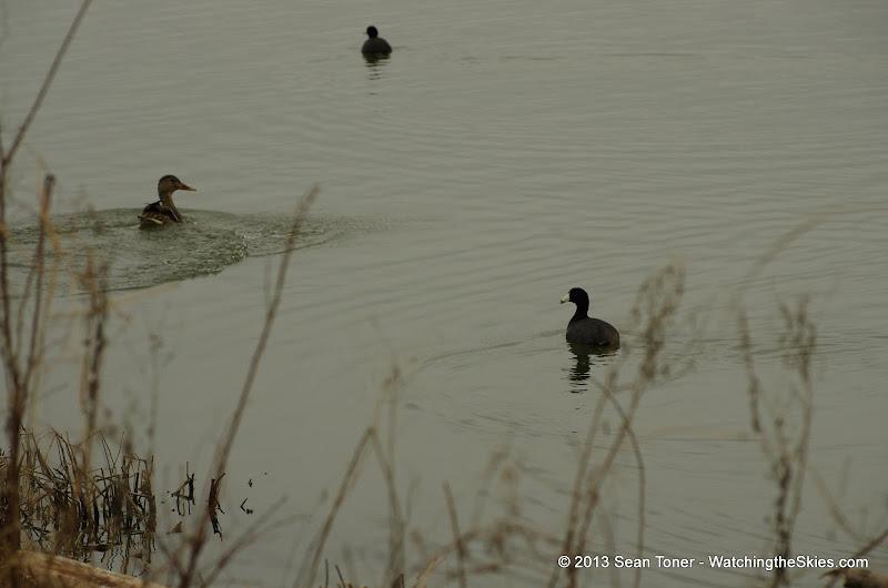 01-26-13 White Rock Lake - IMGP4309.JPG