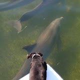 Lola and the Porpoise (2).jpg